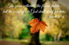 874357c0a41907b8b0cd5eb16e7e35ce--uplifting-scripture-the-grass